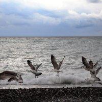 Полет над морем :: Мария Андрейчук