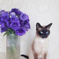 Кошка и букет :: Ирина Крохмаль
