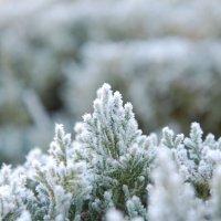 зимняя прогулка :: Роман Латышев