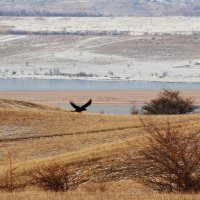 Чёрный ворон :: Светлана Попова