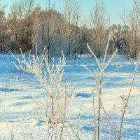 Все в инее зимним утром :: Юрий Стародубцев