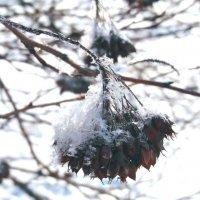 Зимнее макро :: Maryana Petrova