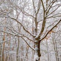 Графика зимней поры :: Сергей Тарабара