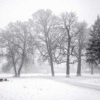 Однажды зимним днем :: Сергей Тарабара