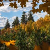 Крайняя осень над Волгой. :: Олег Помогайбин