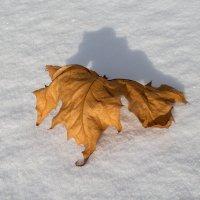 лист на снегу   IMG_0182-3 :: Олег Петрушин