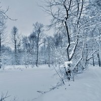 Заснеженный пруд :: Наталья Лакомова