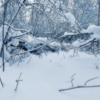 Зима в серебристых тонах :: Наталья Лакомова