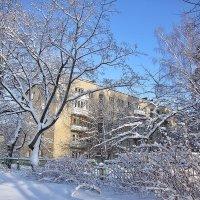 Морозный прозрачный воздух :: Лидия (naum.lidiya)