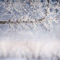 Морозный день :: Альбина Прокопенко