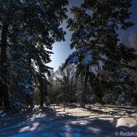 Ночь в зимнем лесу :: Сергей