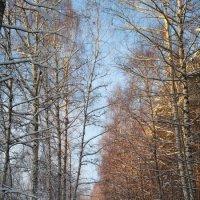 Солнечная зима :: OlegVS S