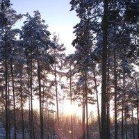 Зимний сонечный день :: OlegVS S