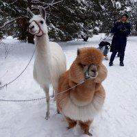 Зима – это замечательное время года, когда все начинают верить в чудеса... :: Ольга Русанова (olg-rusanowa2010)