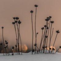толпа на снегу :: Геннадий Свистов