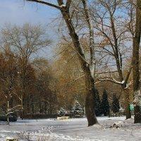Зимний день в парке. :: barsuk lesnoi