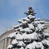 Зима в городе :: Тамара Бедай