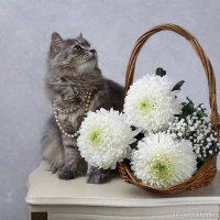 Масяня и букет хризантем :: Ирина Приходько