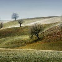 иерархическая лестница в природе :: Elena Wymann