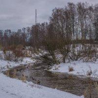 Пейзажей зимних хмурая краса :: Юрий Велицкий