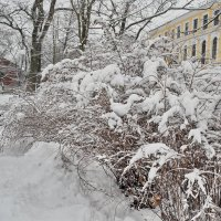Белый день :: Георгий Вересов