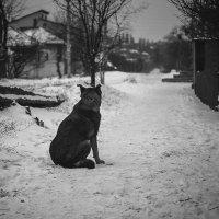 Ожидание . :: Светлана Мельник