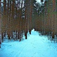 Дорожка в лес :: Raduzka (Надежда Веркина)