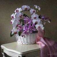 Натюрморт с корзиной орхидей :: Ирина Приходько