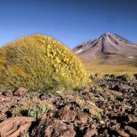 на фоне вулкана Ликанкабур :: Георгий А