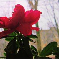Цветы в окне :: Людмила