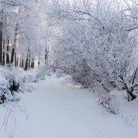 Идут белые снеги... :: Вадим Басов