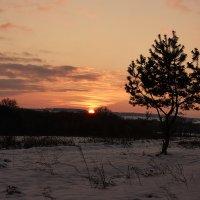 Дерево на закате... :: Сергей