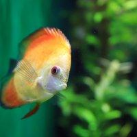 Рыбка :: люба
