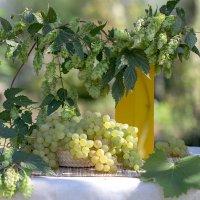 Хмель и виноград :: Елена Ахромеева
