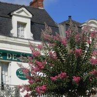 цветущие деревья :: Sabina