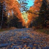Осенняя дорога :: Георгий