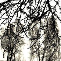 Графика зимы :: Ирина АЛЕКСАндрович