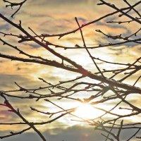 Солнце вышло на  Сочельник  разогнало  мглу! :: Виталий Селиванов