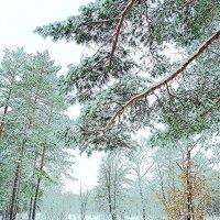 Зима, холода :: Raduzka (Надежда Веркина)