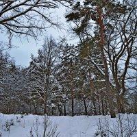 Зимний лес :: Vladimir Semenchukov