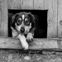 Жил- был пес. :: Стас