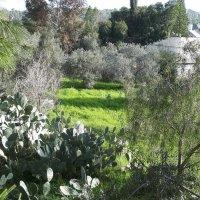 Разгар зимы в Израиле :: Аркадий Басович