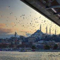 Istanbul :: Георгий Муравьев