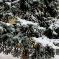 Зима в Ростове :: Нина Бутко