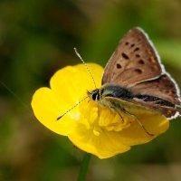 и снова бабочки...3 :: Александр Прокудин