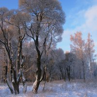 Природа в январе. :: ТАТЬЯНА (tatik)