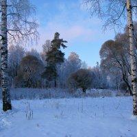 Зимние картинки. :: ТАТЬЯНА (tatik)