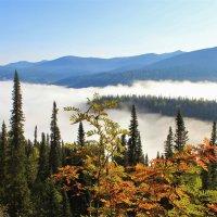 В низине туман :: Сергей Чиняев