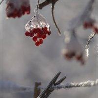 Морозное утро :: Владимир Стаценко