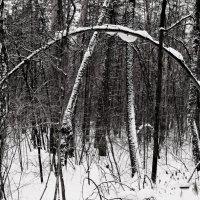 Зимние причуды :: Raduzka (Надежда Веркина)